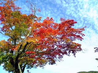 うろこ雲と紅葉